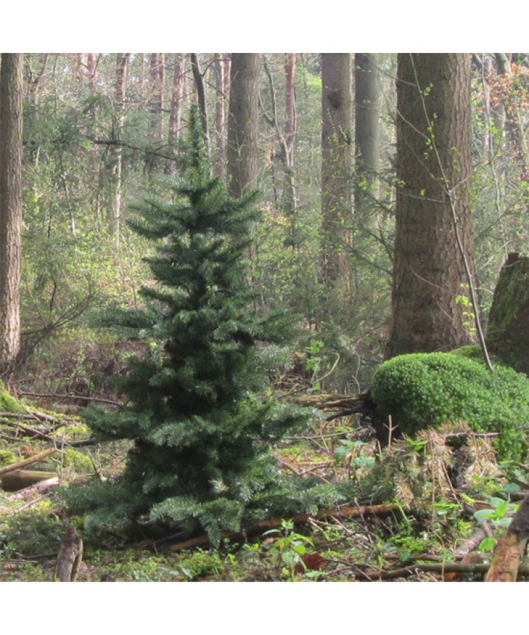 basic-tree-120cm-natural