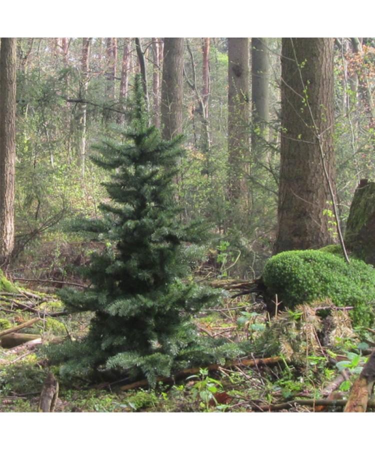 Basic Tree Warm Bordeaux 210cm-106