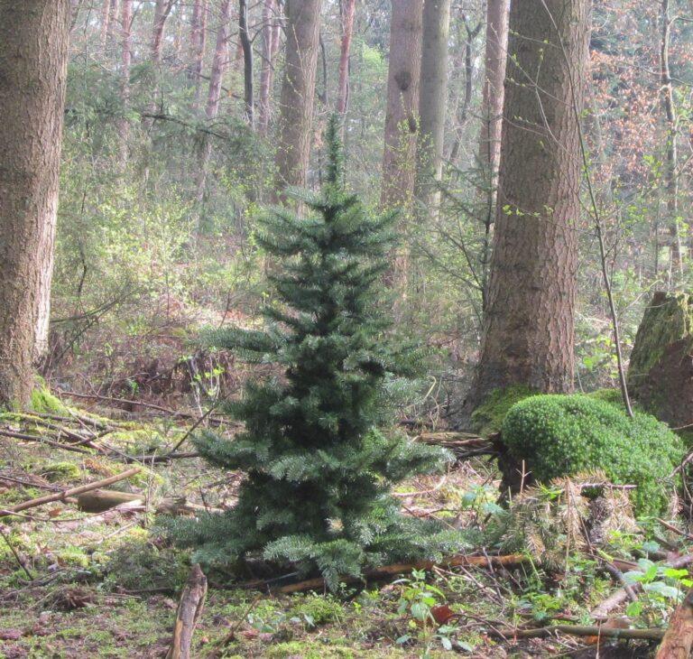 Basic Tree Purple Milka 210cm-1773